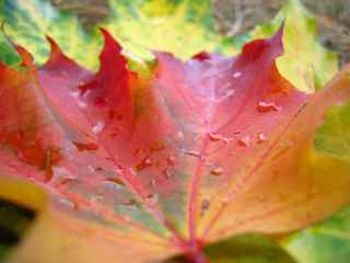 Career change process like leaves changing colors