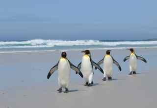 Penguin career change process support team